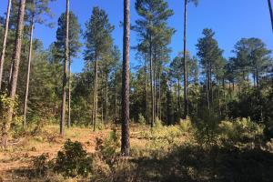 Turn-Key Hunting Land with Ponds  in Fairfield, SC (30 of 47)
