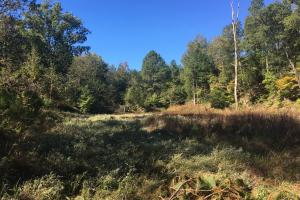 Turn-Key Hunting Land with Ponds  in Fairfield, SC (31 of 47)
