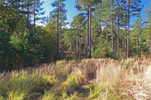 Turn-Key Hunting Land with Ponds  in Fairfield, SC (11 of 47)