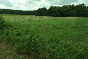 McKinney Branch Homesite and Timber Investment in Franklin, AL (5 of 5)