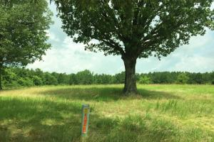 McKinney Branch Homesite and Timber Investment in Franklin, AL (3 of 5)