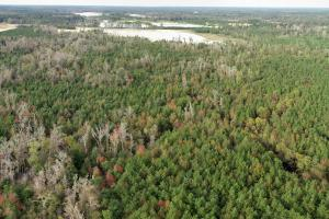 Pine Plantation from the air (6 of 12)