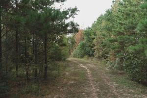Woods road through Pine Plantation (9 of 12)