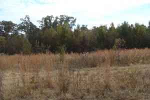120+/- Acres CRP & Hunting Property in Prairie, AR (29 of 39)