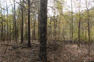 120+/- Acres CRP & Hunting Property in Prairie, AR (27 of 39)