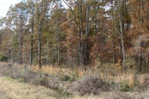 120+/- Acres CRP & Hunting Property in Prairie, AR (28 of 39)
