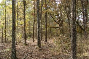 120+/- Acres CRP & Hunting Property in Prairie, AR (25 of 39)
