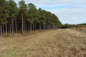 120+/- Acres CRP & Hunting Property in Prairie, AR (4 of 39)