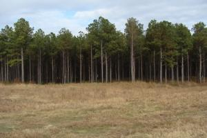 120+/- Acres CRP & Hunting Property in Prairie, AR (5 of 39)