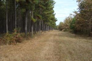120+/- Acres CRP & Hunting Property in Prairie, AR (6 of 39)