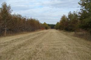 120+/- Acres CRP & Hunting Property in Prairie, AR (19 of 39)