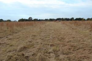 120+/- Acres CRP & Hunting Property in Prairie, AR (36 of 39)