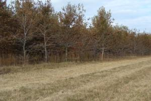 120+/- Acres CRP & Hunting Property in Prairie, AR (20 of 39)
