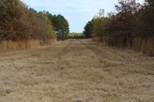 120+/- Acres CRP & Hunting Property in Prairie, AR (21 of 39)