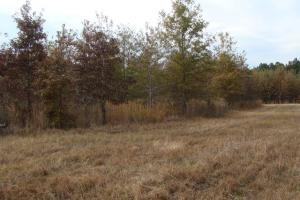 120+/- Acres CRP & Hunting Property in Prairie, AR (31 of 39)
