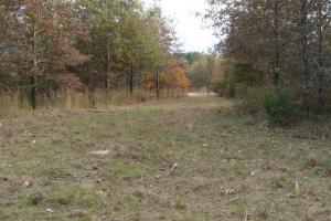 120+/- Acres CRP & Hunting Property in Prairie, AR (22 of 39)
