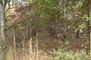 120+/- Acres CRP & Hunting Property in Prairie, AR (35 of 39)