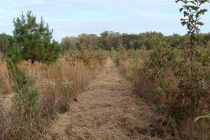 120+/- Acres CRP & Hunting Property in Prairie, AR (32 of 39)