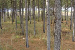 120+/- Acres CRP & Hunting Property in Prairie, AR (8 of 39)