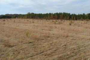 120+/- Acres CRP & Hunting Property in Prairie, AR (37 of 39)