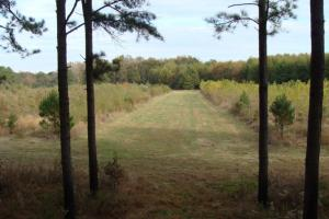 120+/- Acres CRP & Hunting Property in Prairie, AR (11 of 39)