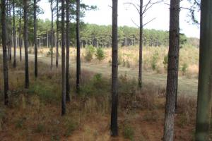 120+/- Acres CRP & Hunting Property in Prairie, AR (9 of 39)
