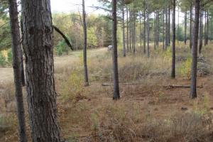 120+/- Acres CRP & Hunting Property in Prairie, AR (16 of 39)