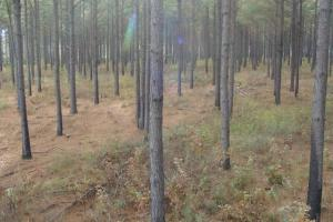 120+/- Acres CRP & Hunting Property in Prairie, AR (15 of 39)
