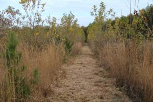 120+/- Acres CRP & Hunting Property in Prairie, AR (34 of 39)
