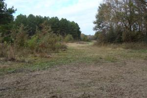 120+/- Acres CRP & Hunting Property in Prairie, AR (24 of 39)