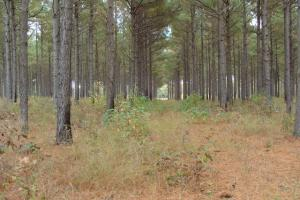 120+/- Acres CRP & Hunting Property in Prairie, AR (18 of 39)