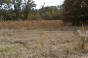 120+/- Acres CRP & Hunting Property in Prairie, AR (30 of 39)
