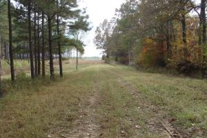 120+/- Acres CRP & Hunting Property in Prairie, AR (3 of 39)