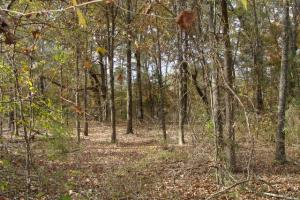 120+/- Acres CRP & Hunting Property in Prairie, AR (26 of 39)