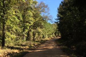 Rock School Road Timber Homesite or Development Tract in Shelby, AL (2 of 6)