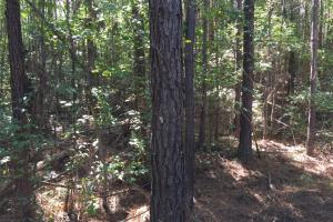 Rock School Road Timber Homesite or Development Tract in Shelby, AL (4 of 6)