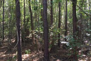 Rock School Road Timber Homesite or Development Tract in Shelby, AL (5 of 6)