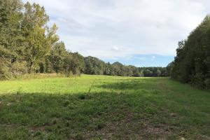 large field/food plot (22 of 38)