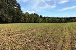X-large food plot with feeder (27 of 38)