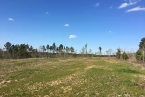 Waterloo Open Land with Creeks & Woods - Laurens County SC