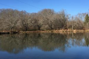 Walnut Grove Timber Recreational and Homesite Tract in Etowah, AL (3 of 8)