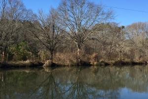 Walnut Grove Timber Recreational and Homesite Tract in Etowah, AL (4 of 8)
