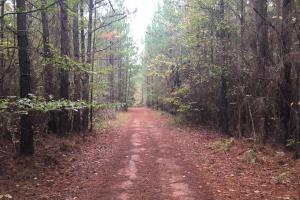 Little River Turnkey Hunting Property in Taliaferro, GA (4 of 35)