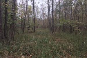 Little River Turnkey Hunting Property in Taliaferro, GA (15 of 35)