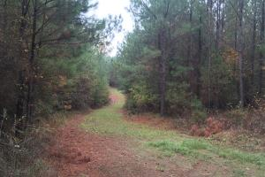 Little River Turnkey Hunting Property in Taliaferro, GA (5 of 35)