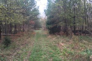 Little River Turnkey Hunting Property in Taliaferro, GA (13 of 35)