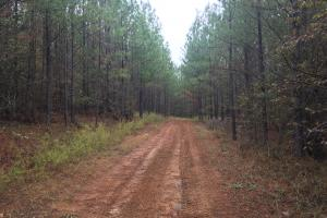 Little River Turnkey Hunting Property in Taliaferro, GA (2 of 35)