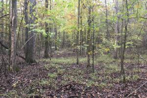 Little River Turnkey Hunting Property in Taliaferro, GA (22 of 35)