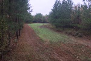 Little River Turnkey Hunting Property in Taliaferro, GA (11 of 35)