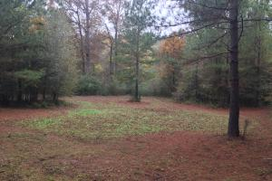 Little River Turnkey Hunting Property in Taliaferro, GA (7 of 35)